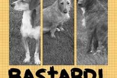 Bastardi storie di cani
